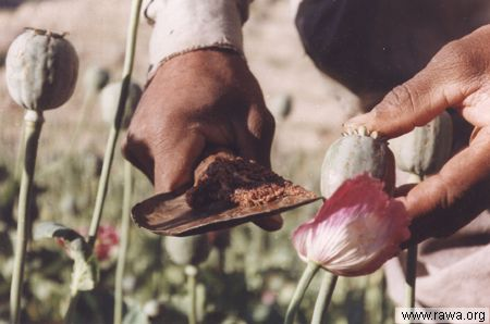 Opium crops in W. Nooristam (RAWA photo - June 2003)