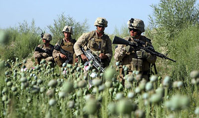 US troops in opium field in Afghanistan