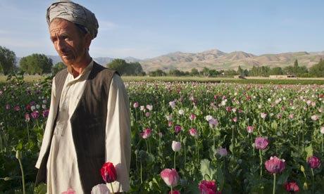 Afghan Poppy Former