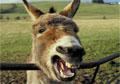 Afghanistan: Led by donkeys