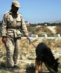 Mine clearance with dog