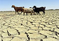250,000 forced to flee Afghanistan, worst drought in years