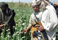 Opium Production in Afghanistan: Strong and Corrupt as Ever