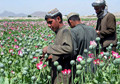 Drug Trade Remains A Contentious Issue For ISAF, Afghan Government
