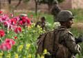 "Afghan H-bomb: Record opium harvest, billions burn in ""war on drugs"""