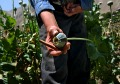 UN report says rising Afghan opium production cause for concern