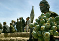 Opium farming in Afghanistan rising again, bleak UN report admits