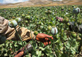 Next Afghanistan battle: Opium