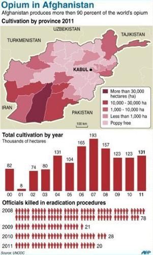 Opium cultivation reached 131,000 hectares in 2011