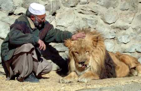 Injured lion Marjan in Kabul Zoo in last days