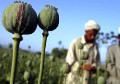 Afghanistan opium fuels insurgency