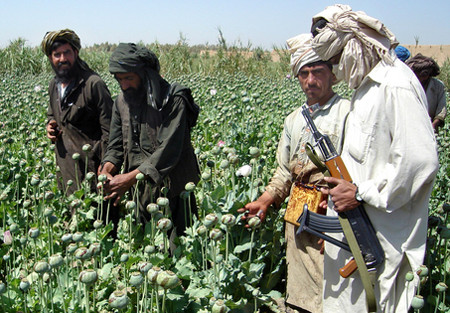 Poppies making a strong comeback in Afghanistan