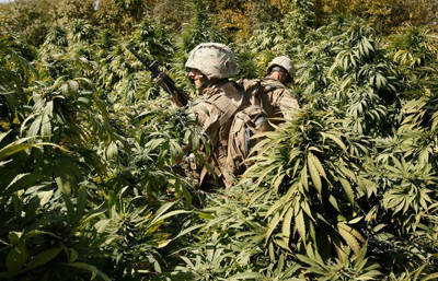 Marines patrol the hash field in a village in Afghanistan