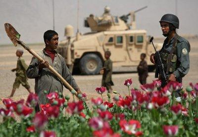Opium Fields in Bakwa.jpg