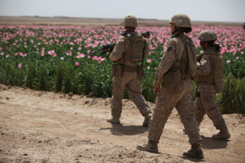 US marines conduct a patrol alongside a poppy field while visiting Afghan settlements in Boldak