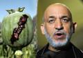 Karzai's pardons nullify drug court gains