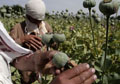 UN report says Afghan opium poppy production hits record high
