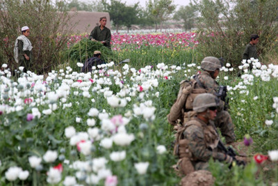 U.S. marines hold in place while a group of Afghan boys tend poppy crops during a security patrol from their patrol base in Helmand province