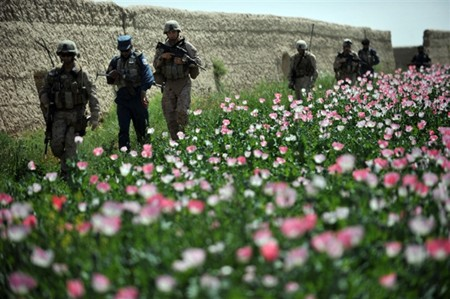 poppy_helmand_district.jpg