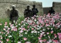 Afghan farmer: I tried, but have to grow poppies to survive