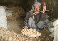 AFGHANISTAN: Uphill struggle for potato farmers in Bamyan Province