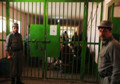 Afghan Man in Prison for Killing Three People, Kills Young Bride