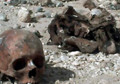 Mass grave found in Afghanistan – reports