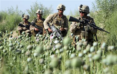 Soldiers in drug fields