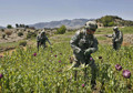 Afghanistan Still World's Opium Capital