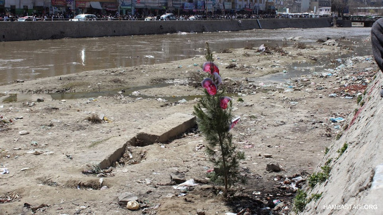 In the end, a tree was planted in the place where Farkhunda's body was burnt.
