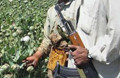 UN: Taliban could clear 500 million Dollar from 2008 drug trade