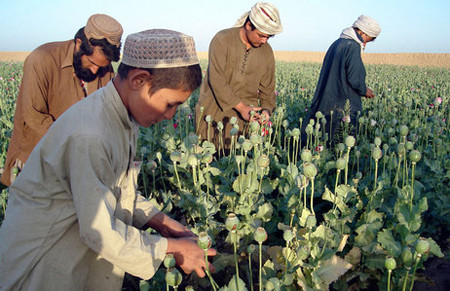 US admits failure to eradicate drug production in Afghanistan