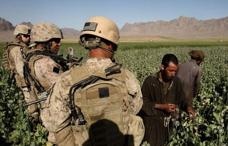US Marines on poppy field