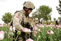 Afghanistan cultivates drugs on record vast area under US invasion