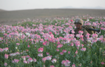 U.S. Marine Corps Lance Cpl. John K. Silvernail in a field of poppy during a halt in a security patrol in Helmand province, Afghanistan